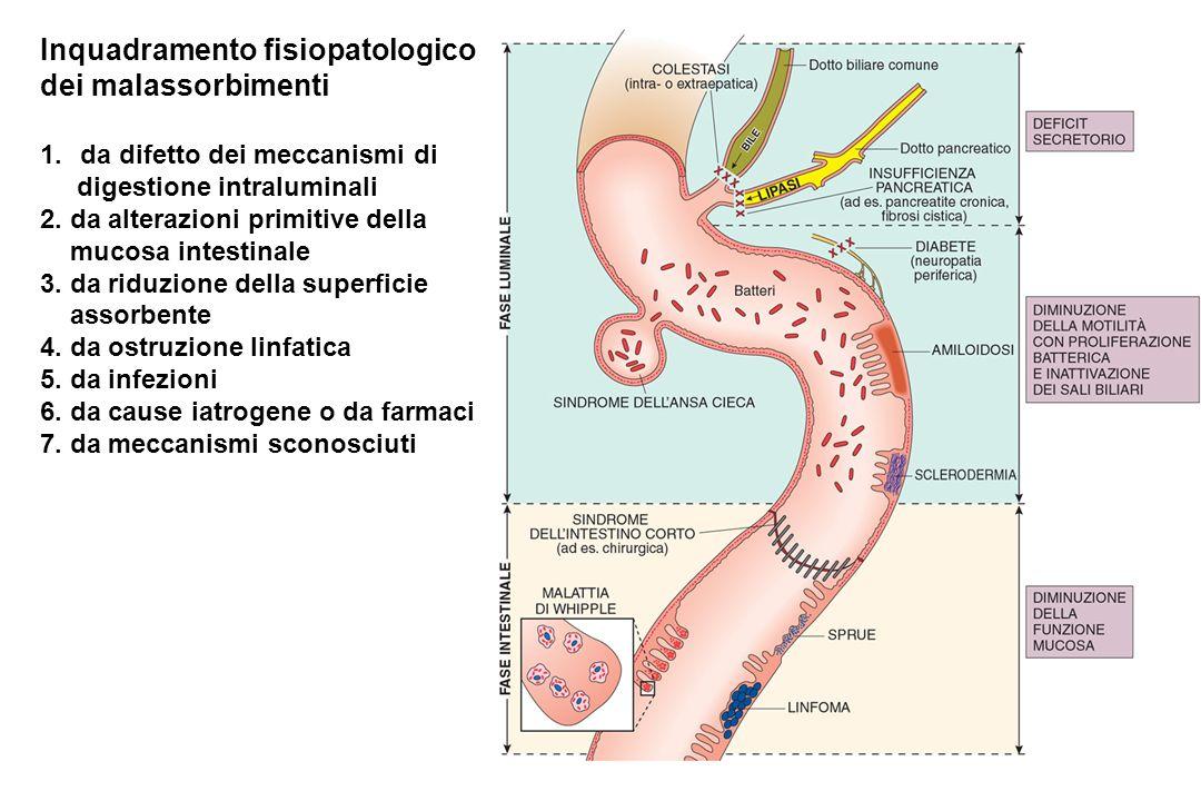 Inquadramento fisiopatologico dei malassorbimenti