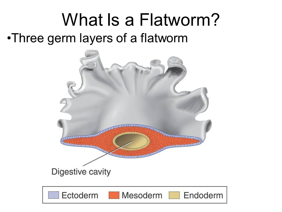 Worms: Flatworms, Roun...