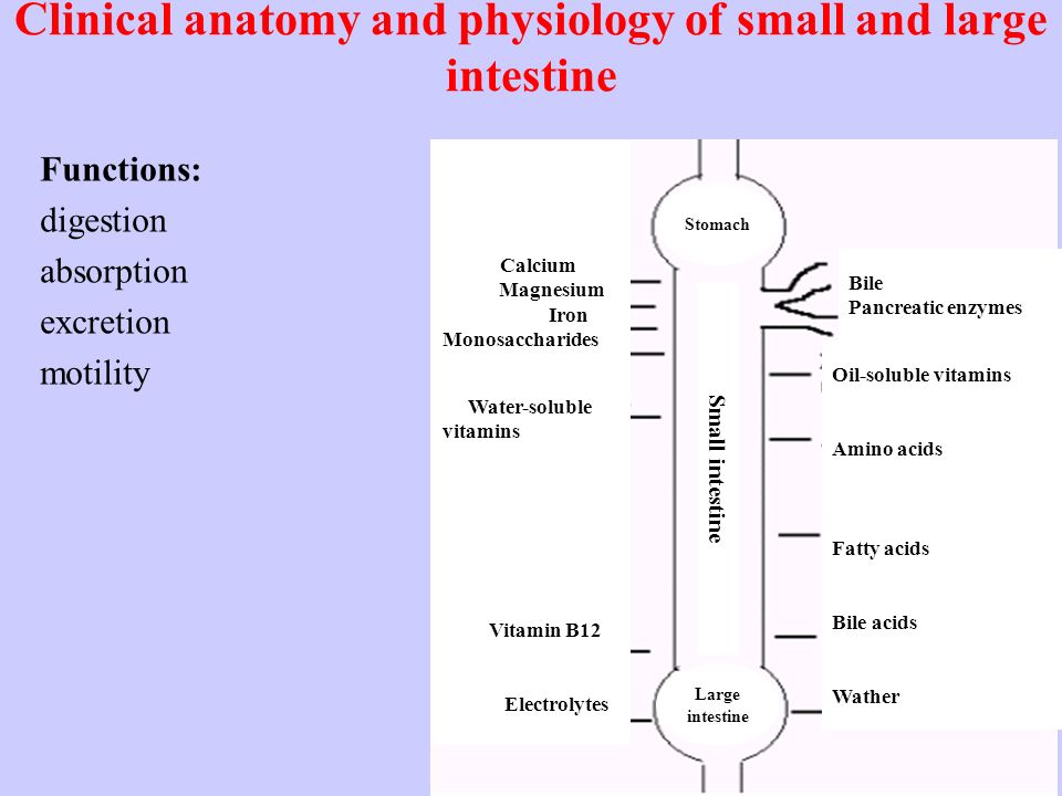 Old Fashioned Anatomy And Physiology Of Small Intestine Ppt Picture ...