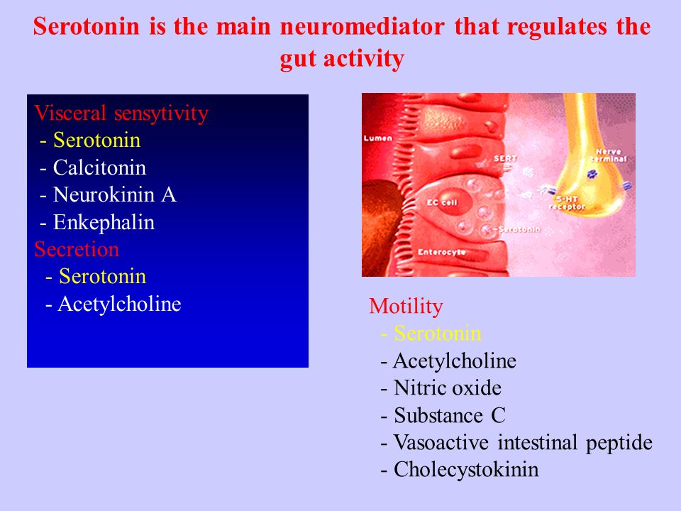 intestine and virus and serotonin jill scott insomnia