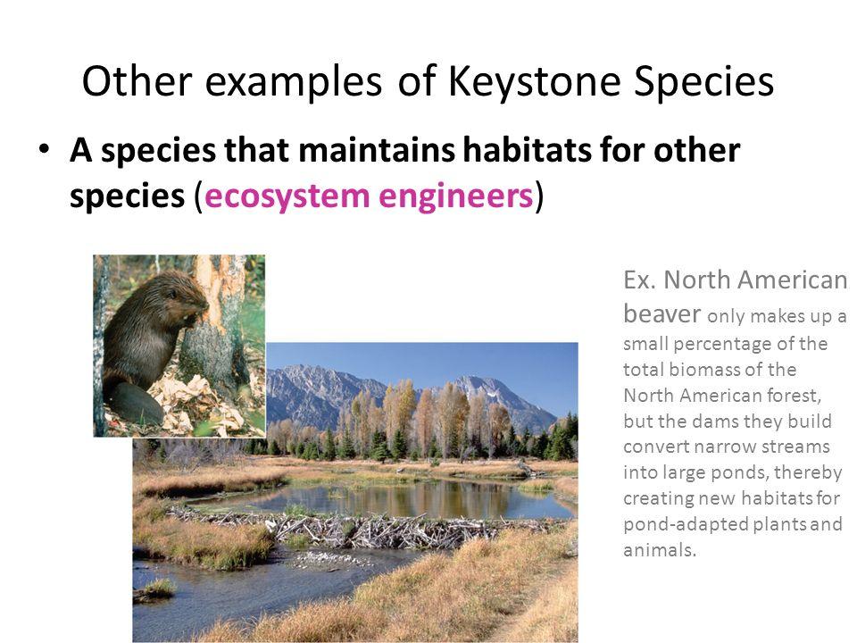 Unit 2 Lesson 8: - Biodiversity Hotspots - Brown Bag Surprise ...