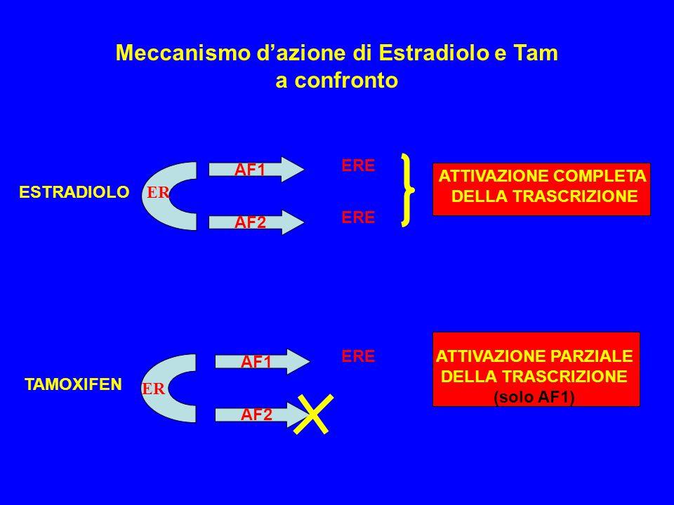 Meccanismo d'azione di Estradiolo e Tam