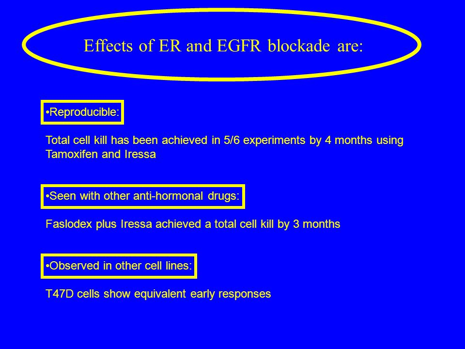 Effects of ER and EGFR blockade are: