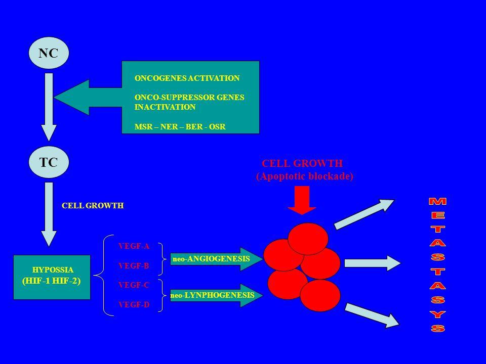 NC TC METASTASYS CELL GROWTH (Apoptotic blockade) (HIF-1 HIF-2)