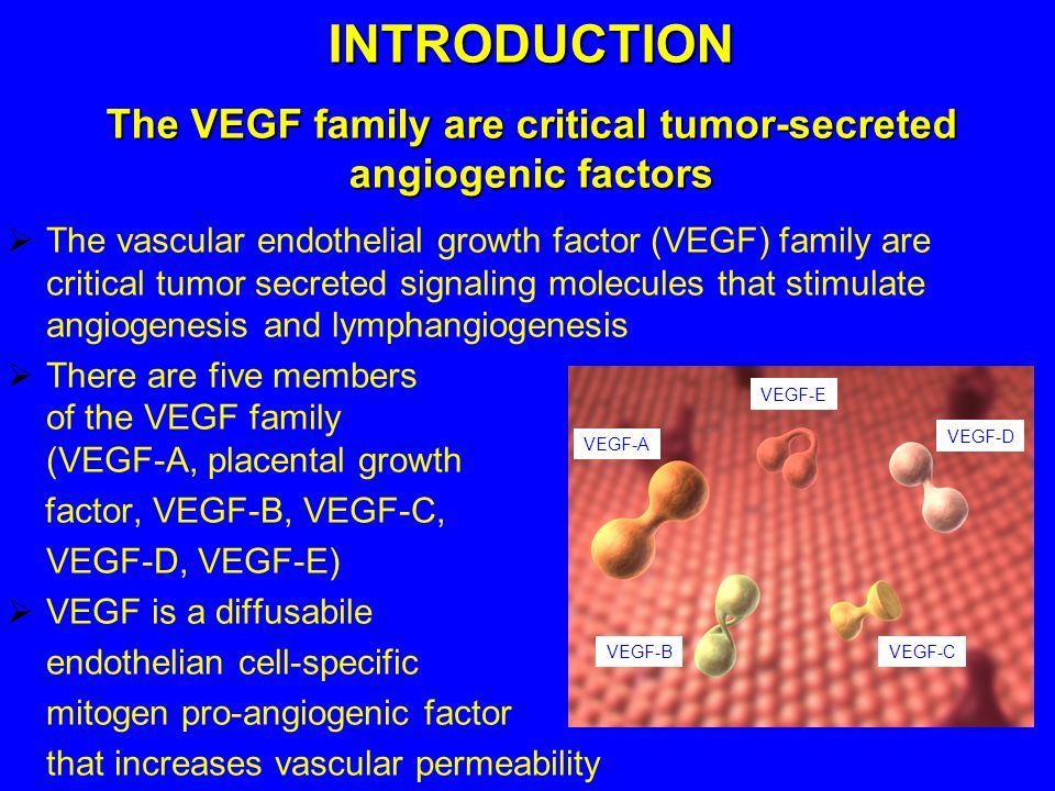 The VEGF family are critical tumor-secreted angiogenic factors
