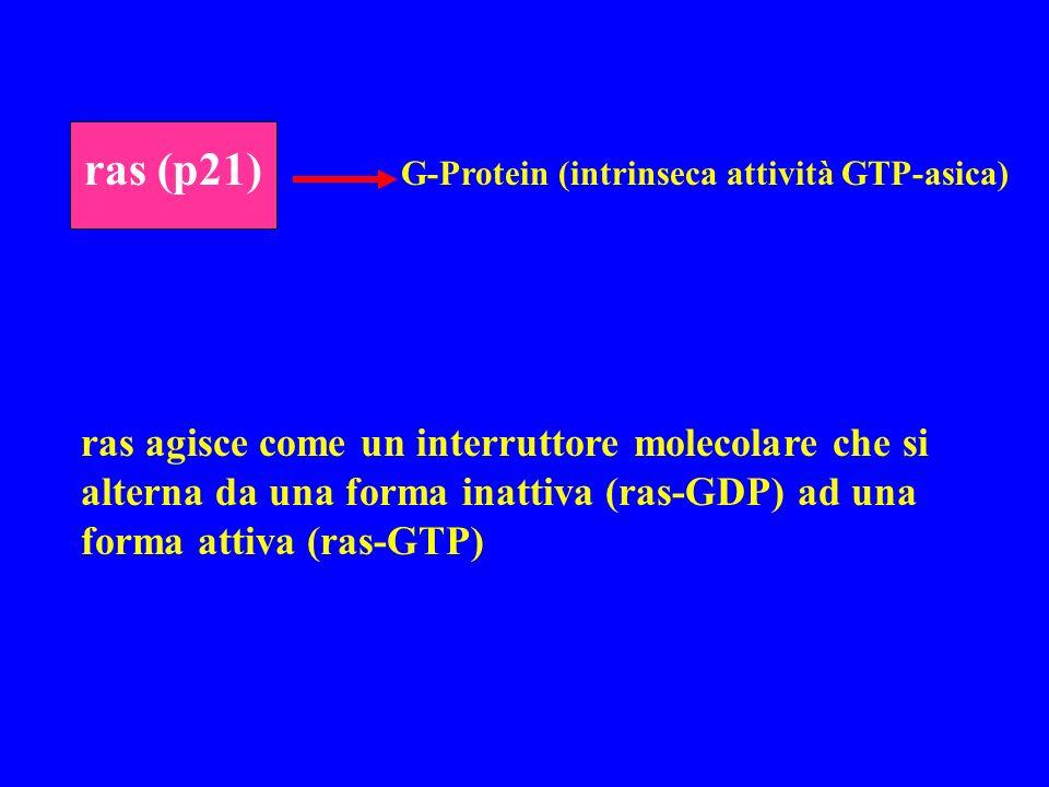 ras (p21) G-Protein (intrinseca attività GTP-asica)