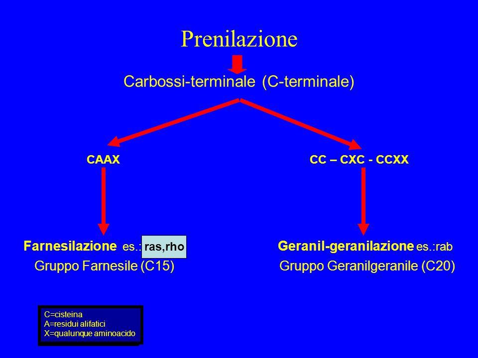 Carbossi-terminale (C-terminale)