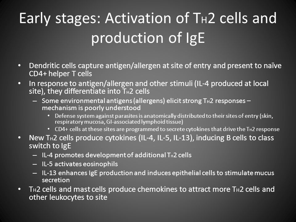 Early stages: Activation of TH2 cells and production of IgE
