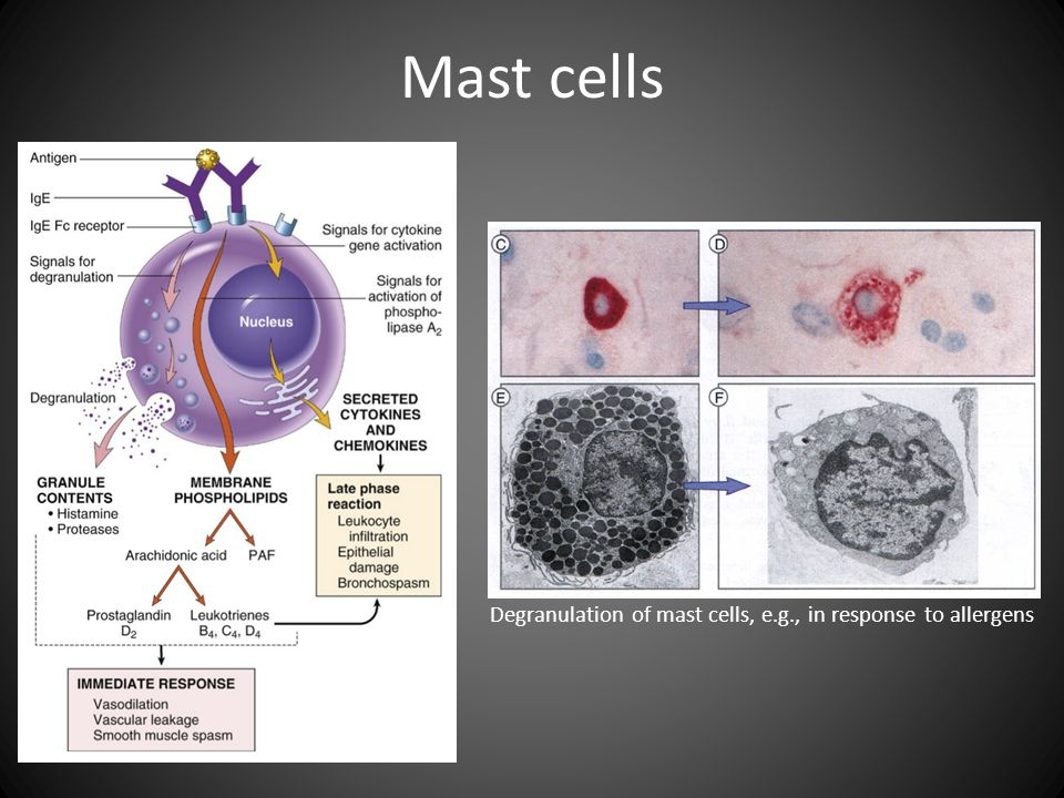 Mast cells Degranulation of mast cells, e.g., in response to allergens
