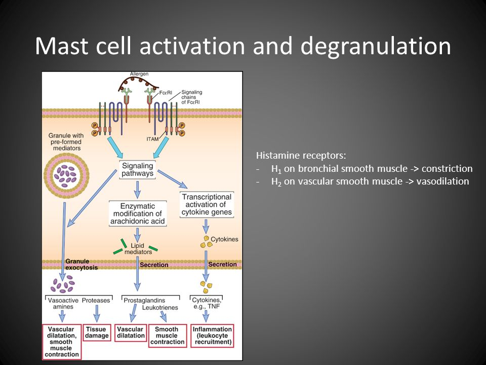 Mast cell activation and degranulation