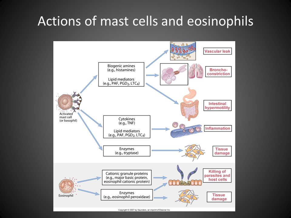 Actions of mast cells and eosinophils