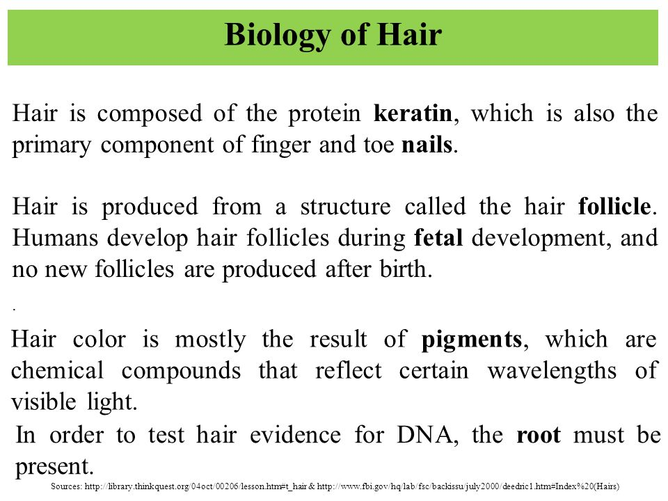 hairs fibers forensic science ppt download. Black Bedroom Furniture Sets. Home Design Ideas