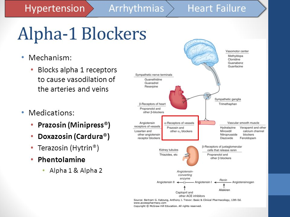 Alpha-1 Blockers Hypertension Arrhythmias Heart Failure Mechanism: