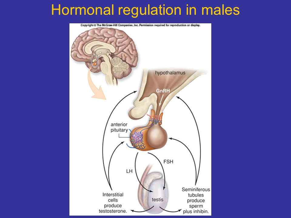 Regulated sperm production of how