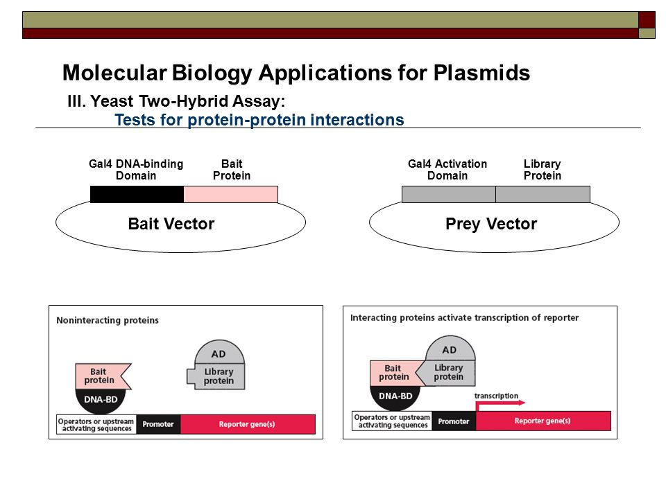 high yield molecular biology pdf download
