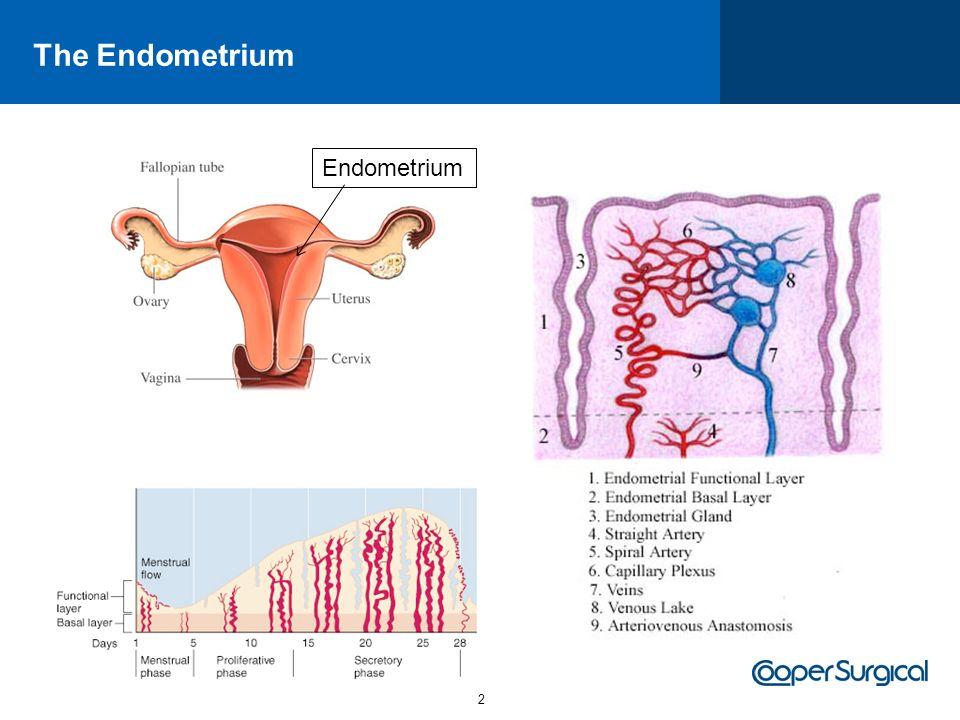 The Endometrium Endometrium