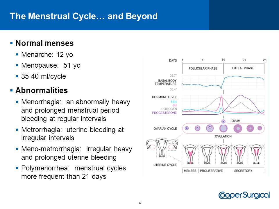 The Menstrual Cycle… and Beyond