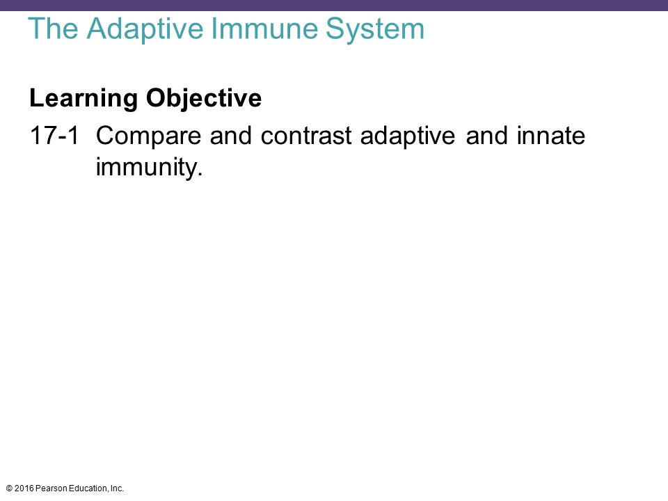 compare and contrast innate and adaptive immunity essay By essayagents | nov 4, 2016 | compare and contrast essay  the differences  between the adaptive and innate immune systems have to do with their mode of.