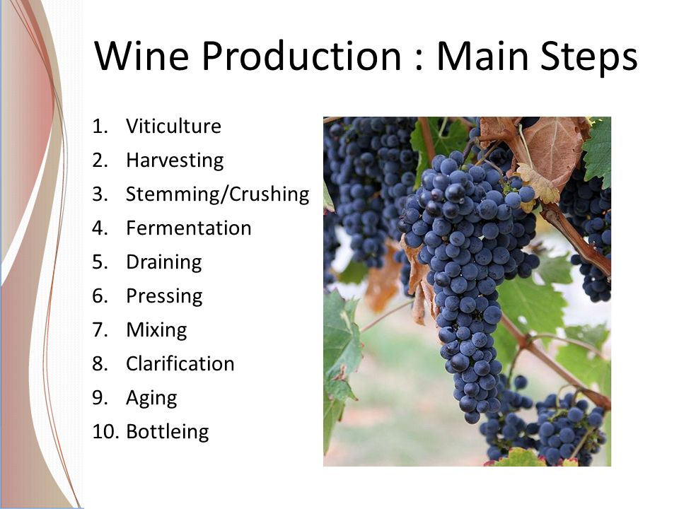 Wine Production : Main Steps