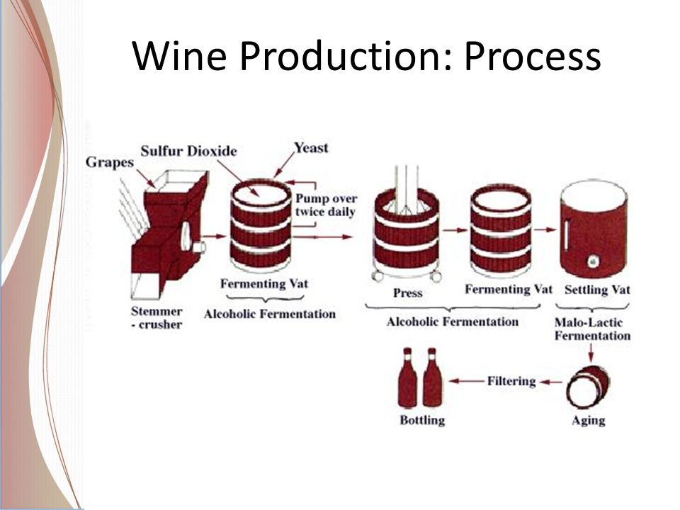 Wine Production: Process