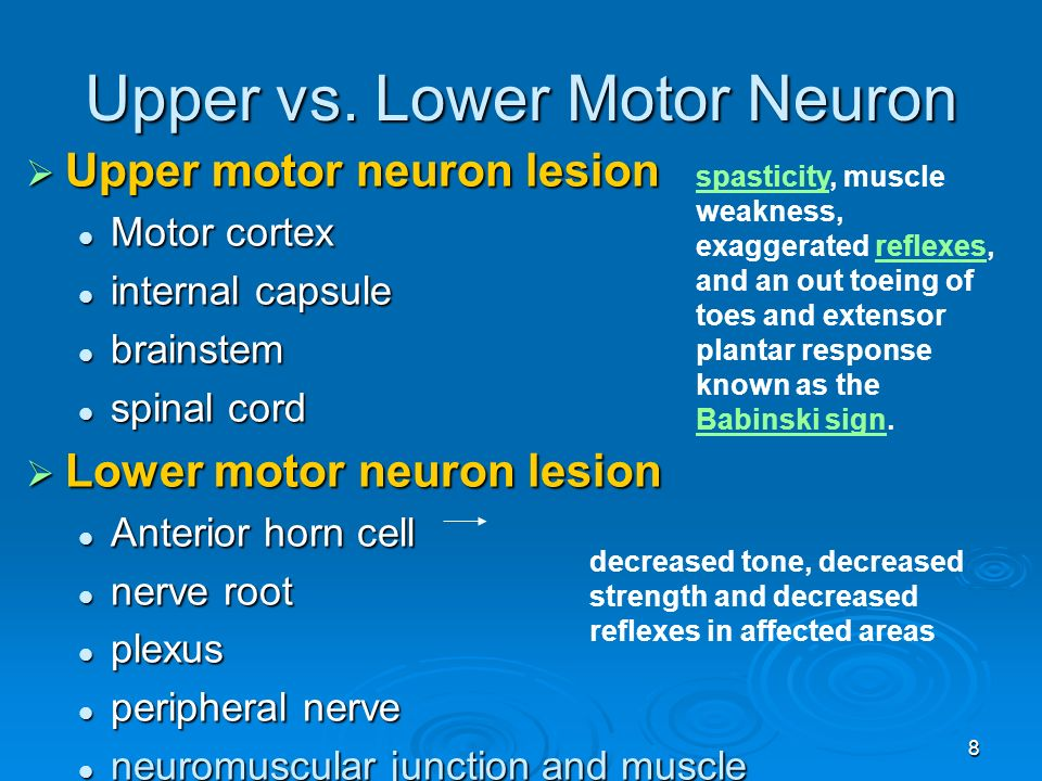Disease of spine and spinal cord ppt video online download What is lower motor neuron disease