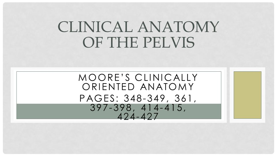 Clinical Anatomy of the Pelvis - ppt video online download