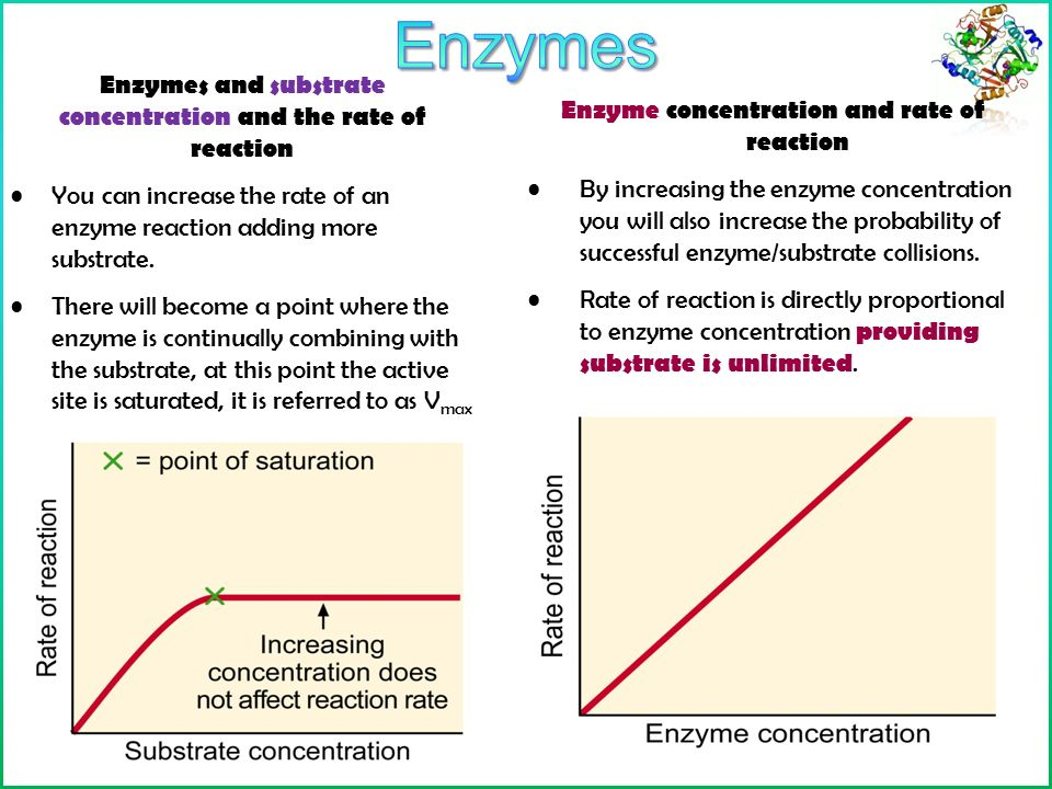 effect of substrate concentration on rate of reaction essay Effect of substrate concentration on rate of reaction essay sample aim: the aim of the investigation was to investigate the effect of substrate concentration hydrogen peroxide h o (in %) on the rate of reaction of the enzyme catalase (in 1/mean time.