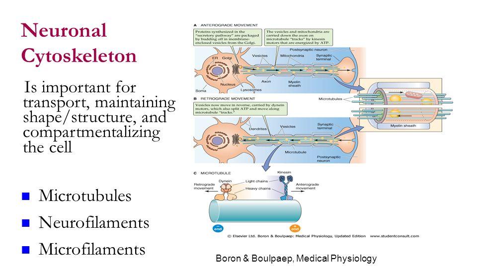 boron boulpaep medical physiology pdf