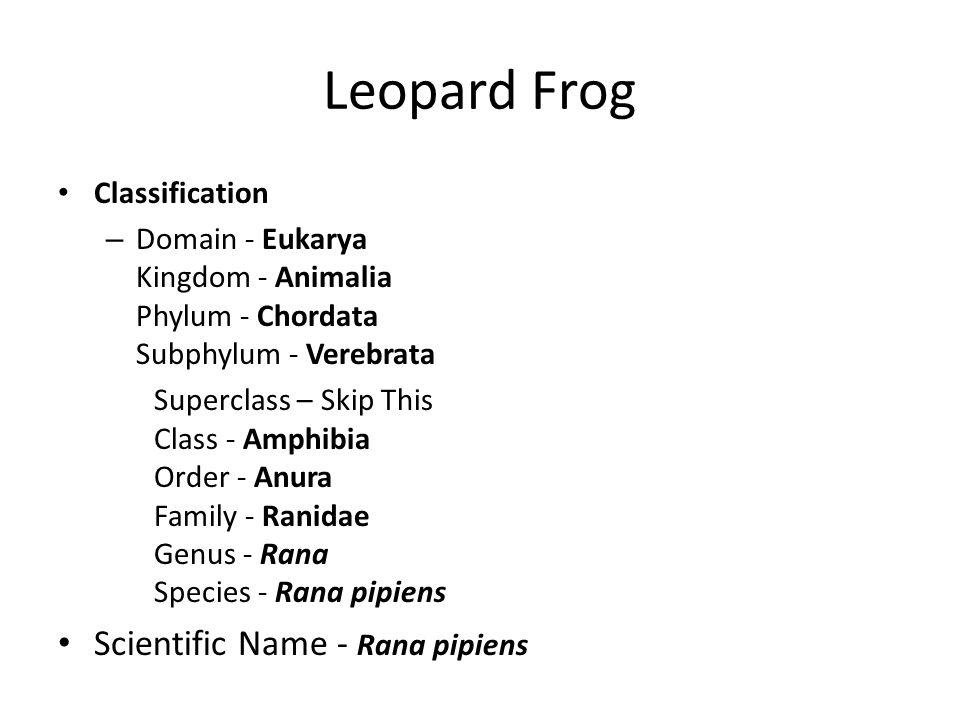 taxonomic classification of field frogs Himalayan forest frog clade fang yan1  the species in genus ingerana are  small, plump frogs with  thailand national history museum (thnhm), and field.