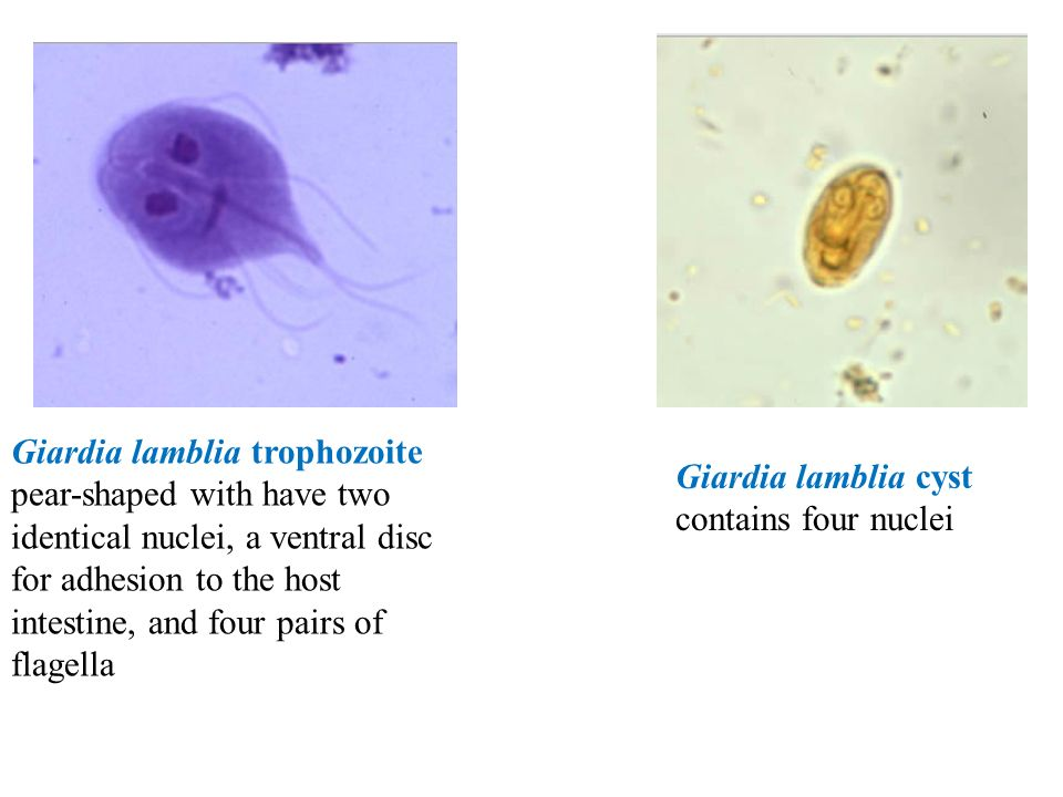 Parasitology can be classified to - ppt download