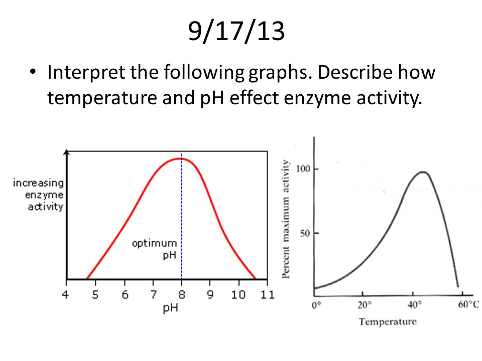 Investigating effect of temperature on the activity of lipase