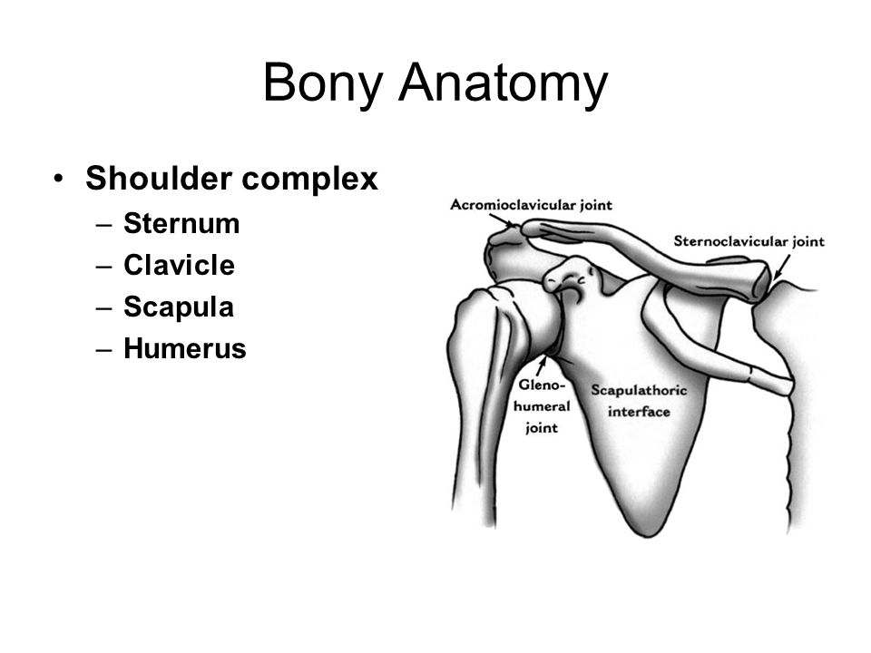 Bony anatomy of shoulder
