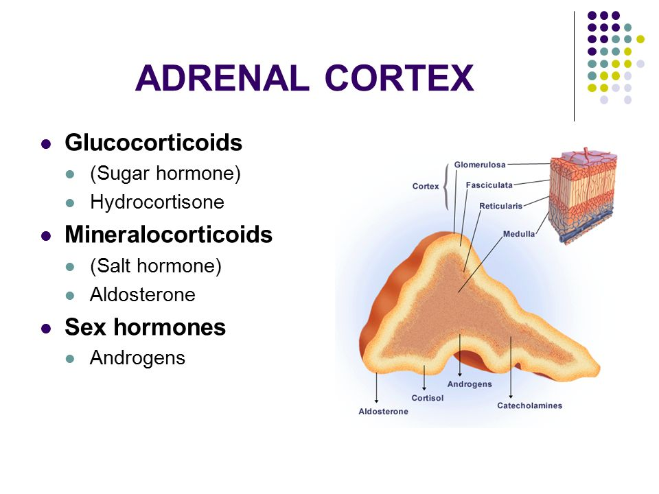 Adrenal Sex Hormones 40