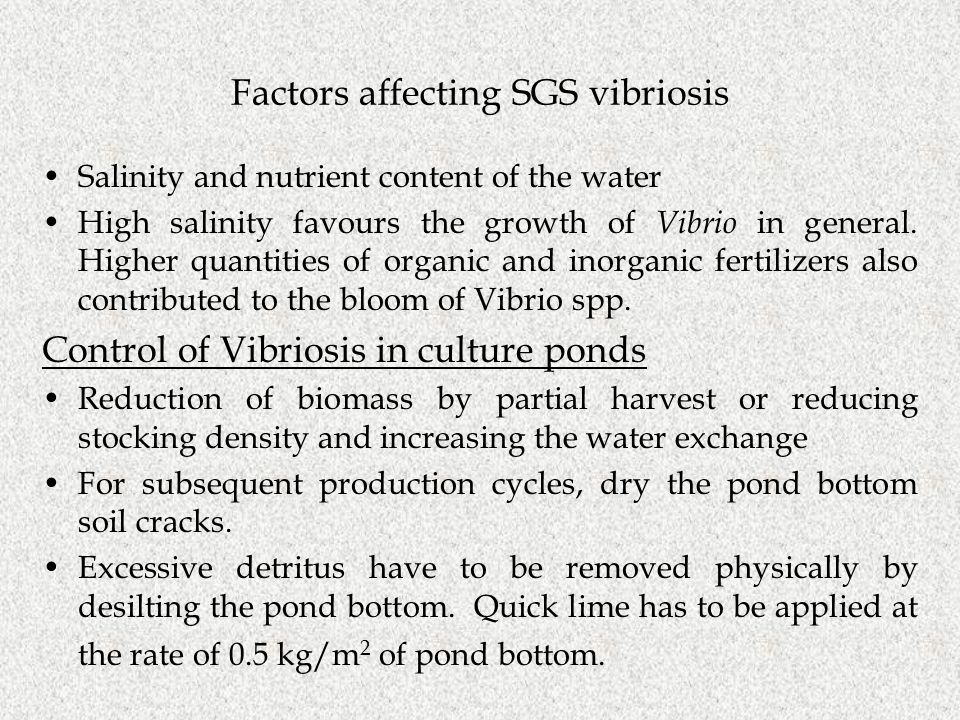 Factors affecting SGS vibriosis