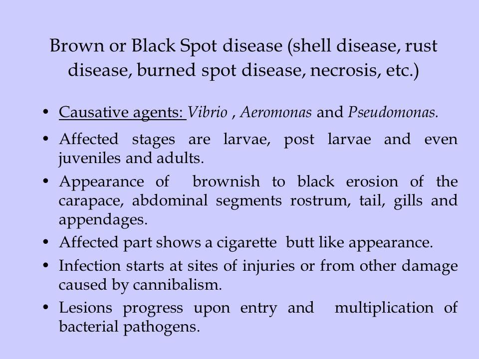 Brown or Black Spot disease (shell disease, rust disease, burned spot disease, necrosis, etc.)