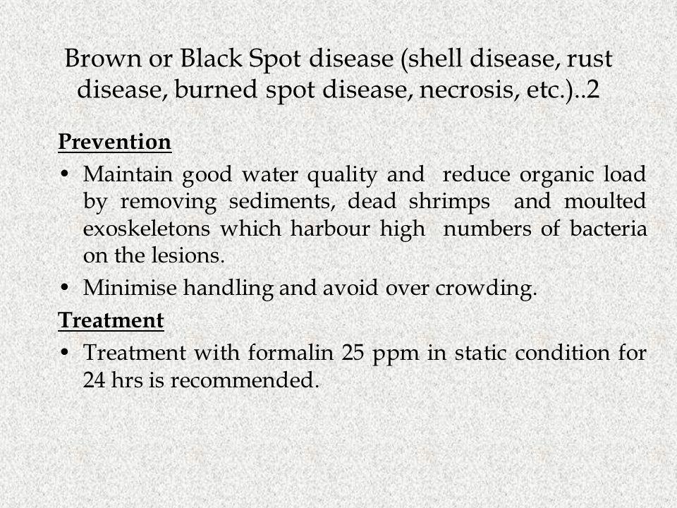 Brown or Black Spot disease (shell disease, rust disease, burned spot disease, necrosis, etc.)..2