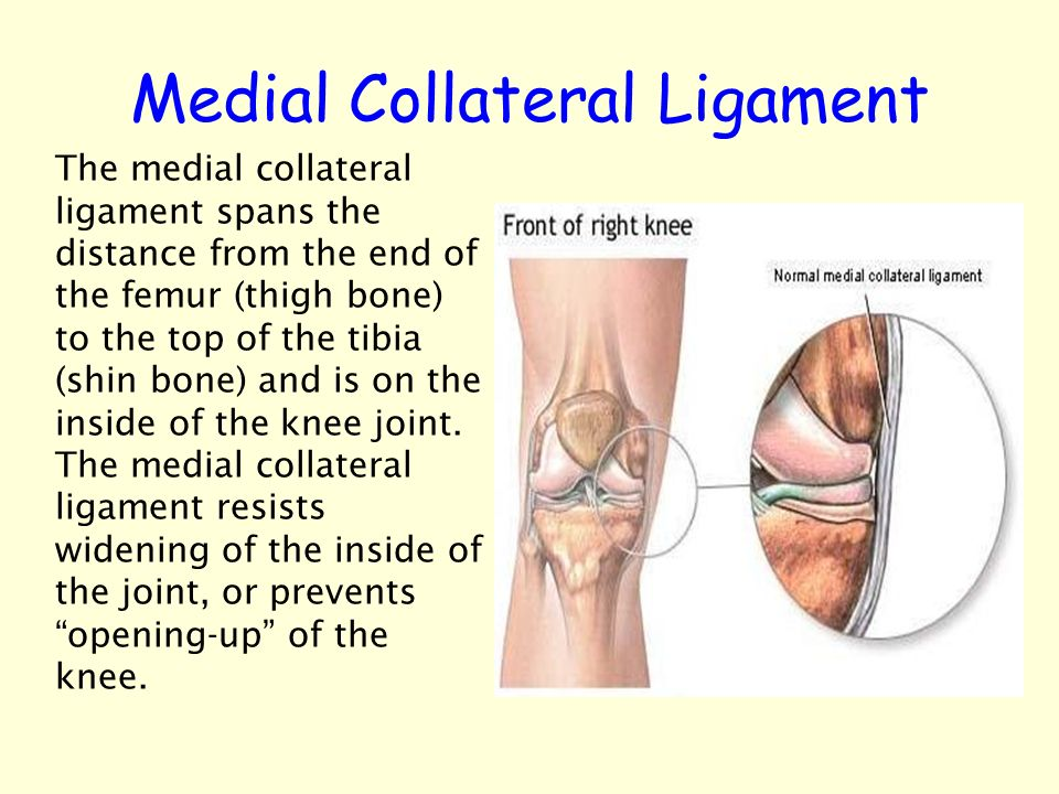 Injuries To The Knee Ligaments Tendons Menisci Patella ...