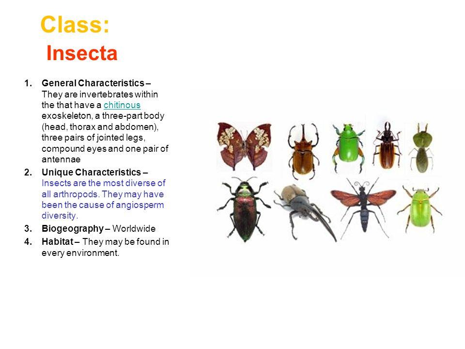 Ecdysozoa The Ecdysozoans are a grouping of protostome ...