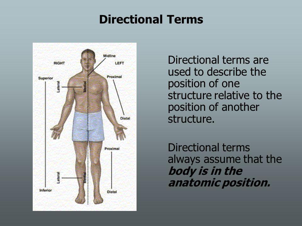 Excepcional Relative Positions Anatomy Composición - Imágenes de ...