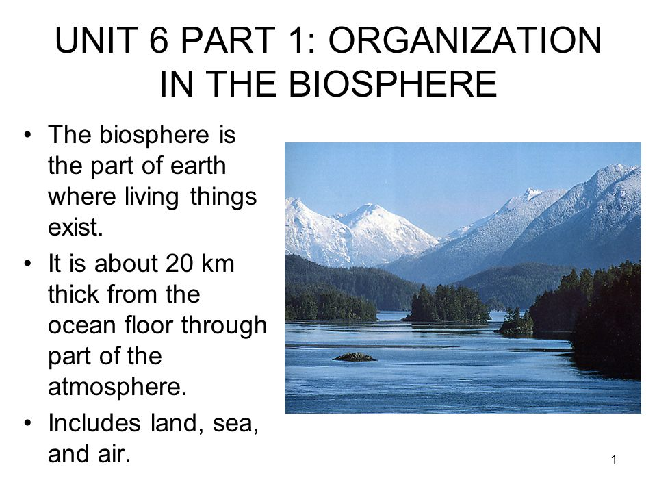 UNIT 6 PART 1: ORGANIZATION IN THE BIOSPHERE - ppt download