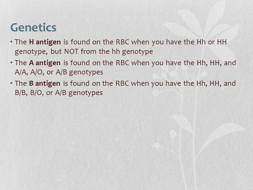 Genetics The H antigen is found on the RBC when you have the Hh or HH genotype, but NOT from the hh genotype.