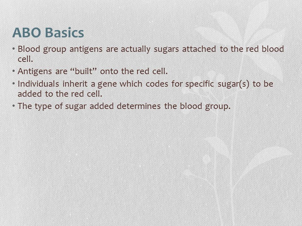 ABO Basics Blood group antigens are actually sugars attached to the red blood cell. Antigens are built onto the red cell.