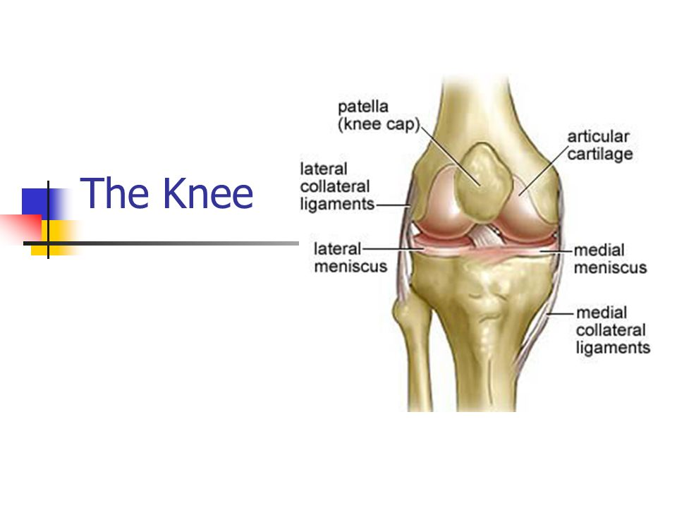 Awesome Knee Anatomy Video Collection - Anatomy Ideas - yunoki.info