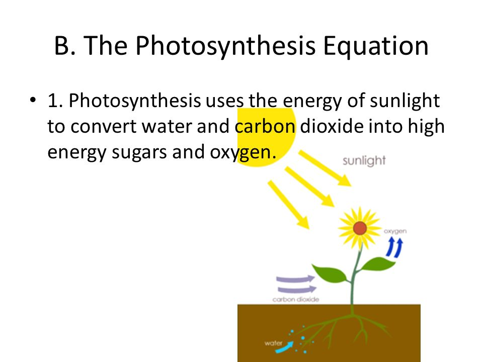 photosythesis word equation Fill in the blanks from the words listed in the word bank, then keep this sheet handy to prepare for tests and quizzes on life science and photosythesis.