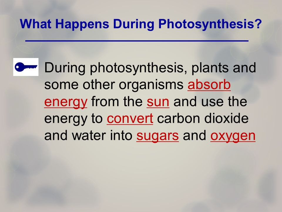 What happens during photosythesis