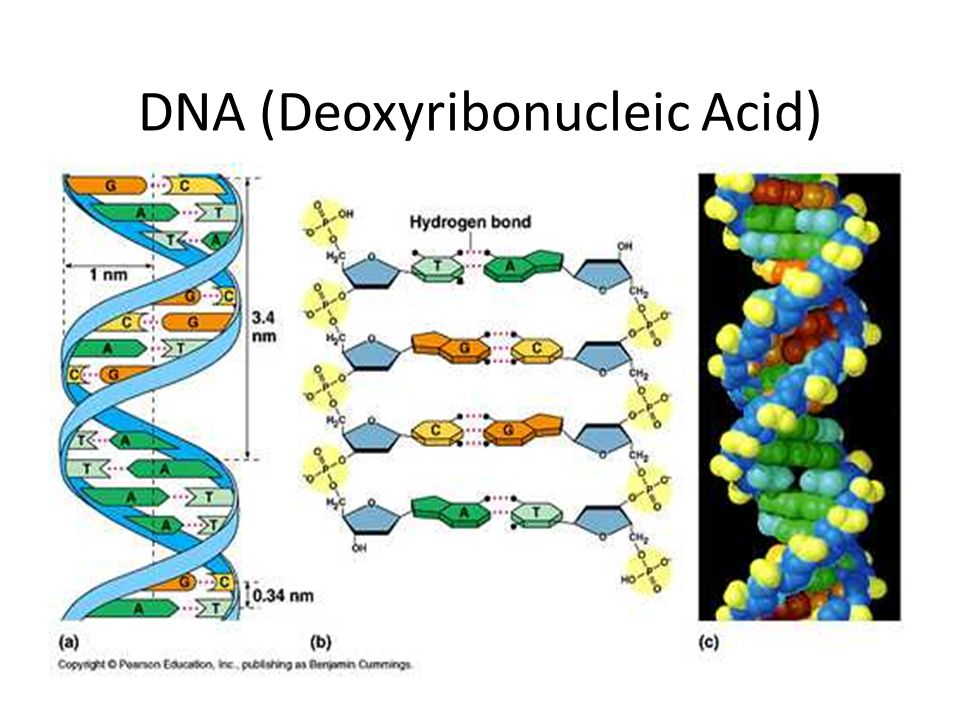 an analysis of the topic of the deoxyribonucleic acid If genomic analysis is done, genes of both cancer tumor and normal tissue need to be analyzed  (deoxyribonucleic acid),.