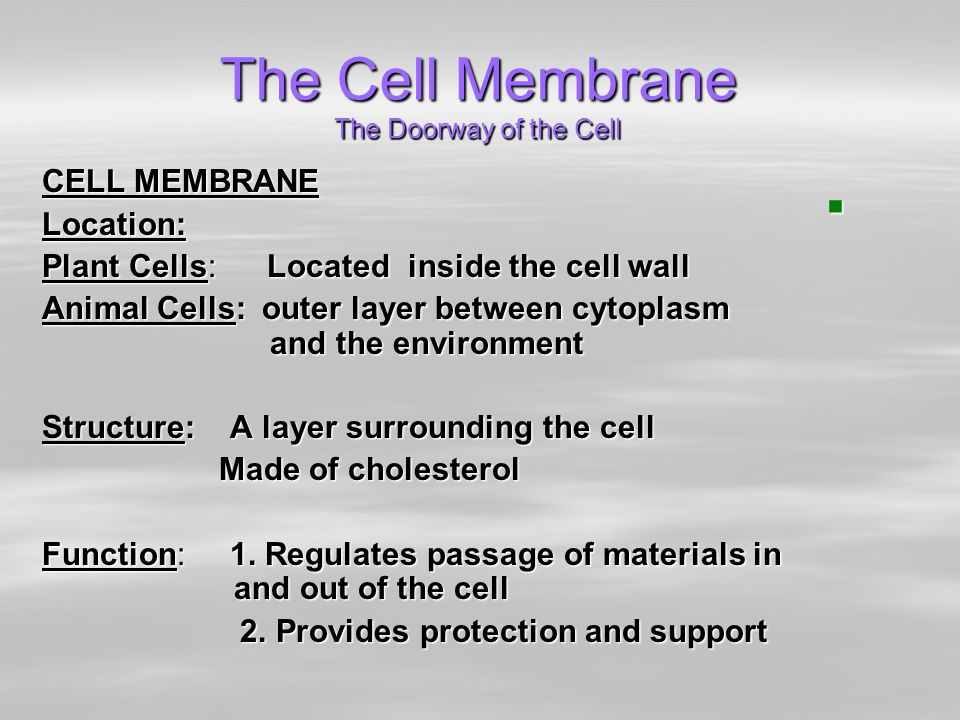 Parts of plant and animal cells structure and function ppt video the cell membrane the doorway of the cell malvernweather Image collections