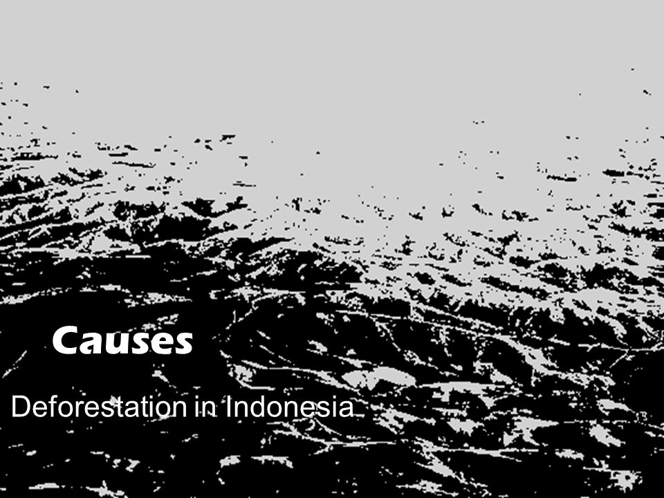 """reaction paper for deforestation According to research from washington-based chain reaction research, there are now 365 companies with no deforestation, no peatland, no worth the paper they're written on"""" because of their association with illegal deforestation in the leuser ecosystem in sumatra, home to the largest remaining."""