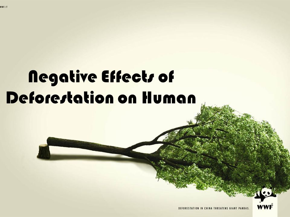 Negative Effects of Illegal Logging Essay Sample