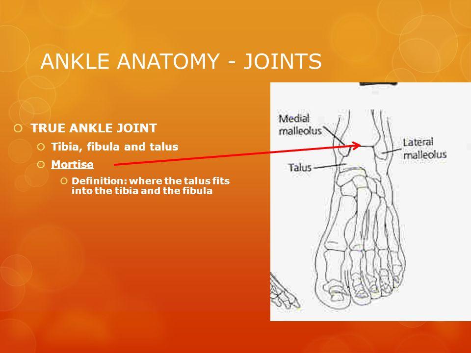 Tarsal Bone Anatomy Bellissimonyc